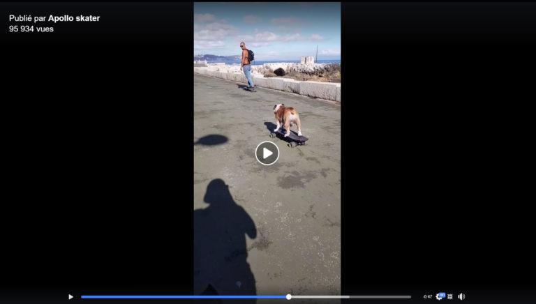Le chien Apollo skater en skate électrique